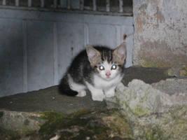 Kitten by NicamShilova