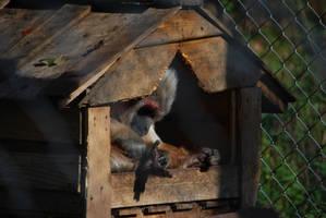Seated Monkey by NicamShilova