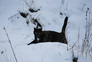 Calico Cat in the Snow by NicamShilova
