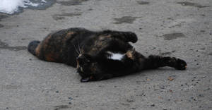 Cat Relaxation by NicamShilova
