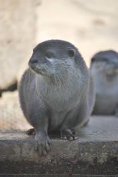Otter by NicamShilova