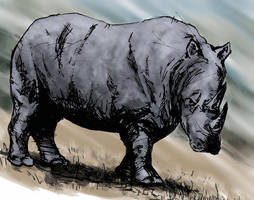 Rhino by mikemorrocco