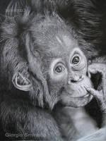 Baby orango - pencil by selvatico3