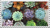 [stamp] succulents by environmentalism