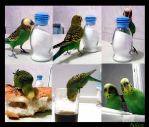 hungry bird by buloz