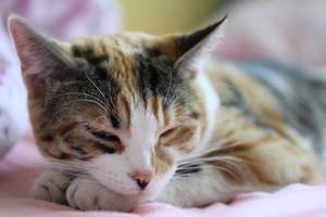 Sleeping Kitty by emmalemmadingdong