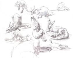 Kangaroo studies by davidsdoodles
