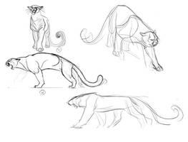 Cougar Concepts_2 by davidsdoodles