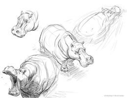 Class Handout_Hippos by davidsdoodles