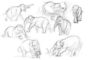 Elephant Studies_classhandout by davidsdoodles