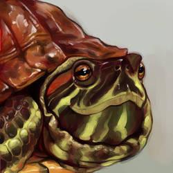 Turtle by AlligatorCreator