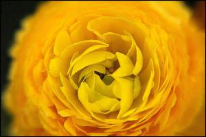 yellow by fizikl