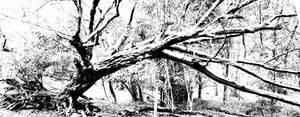 timber by Samtheengineer
