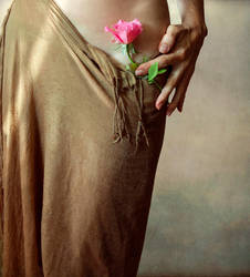 Rose by Siannia