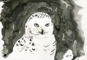 Snowy owl by ZyriFrost