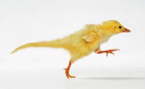 My Dinosaur Chick (2015) by Cristian-Milia