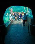 Underwater Viewing Tunnel by SpAzZnaticShuRIken