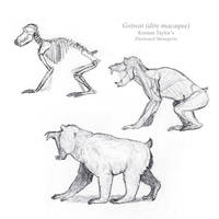 Gotwat Anatomical Study by IllustratedMenagerie