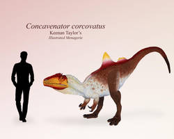 Concavenator corcovatus by IllustratedMenagerie