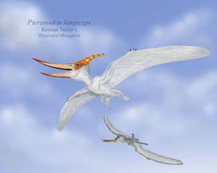 Pteranodon longiceps by IllustratedMenagerie