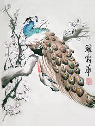 Peacock by toedeledoki