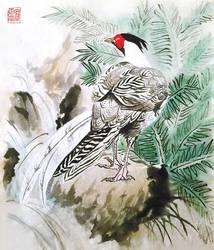Silver Pheasant by toedeledoki