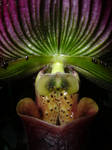 Orchid, Go by mooshfoo