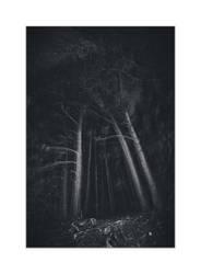 dvs419 by ForrestBump