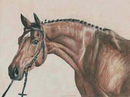 Dun Horse by Ianish
