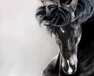 Spirit of the wind by Ianish