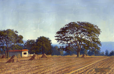 the field, 2005 by bioimagen