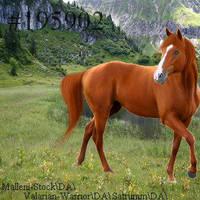 TSSAvatar by HorsesAreMyLife09