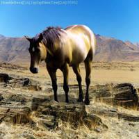 Buckskin-Desert by HorsesAreMyLife09