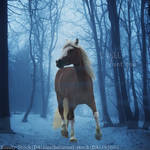 Sweetest Desires-TSS by HorsesAreMyLife09
