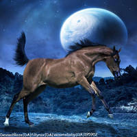 BayArabian_01 by HorsesAreMyLife09