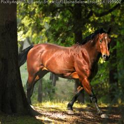 BayInForest02 by HorsesAreMyLife09