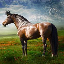 AgeOfTheNewKing by HorsesAreMyLife09