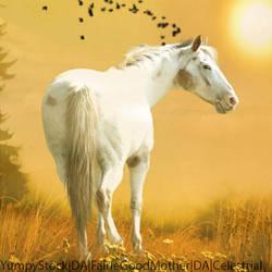 AppyBoy! by HorsesAreMyLife09
