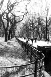 Central Park by heavyglance