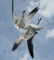 Sea Gulls... by ItsAllStock