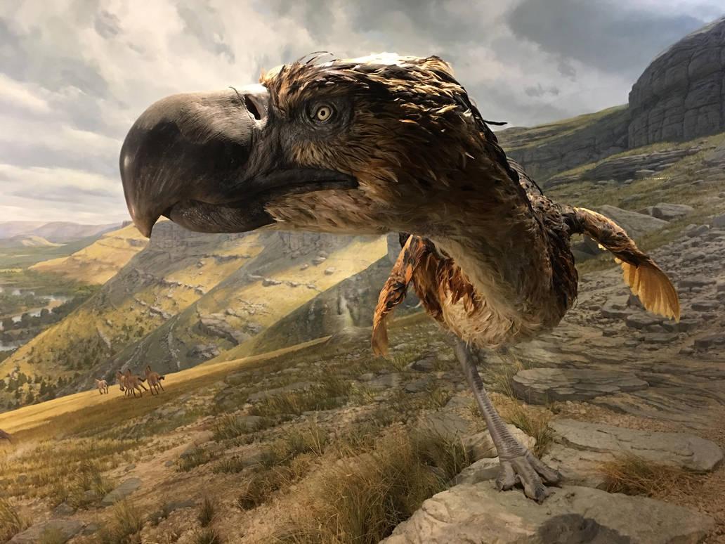 Terror Bird by ItsAllStock
