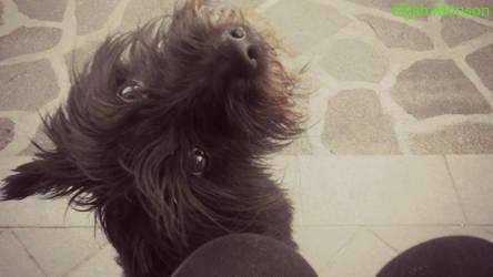 He is my dog!:3 by ElijahMonson