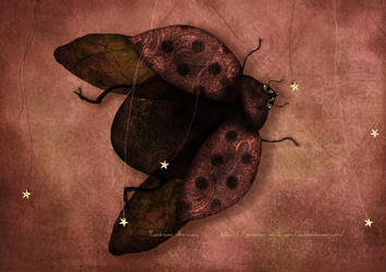 The ladybug who meet the stars by missdine