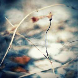 my mystery. by Proseuche