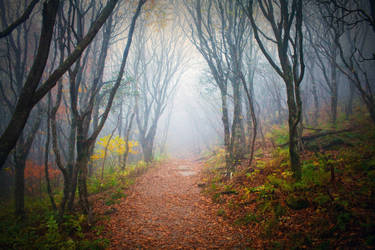 Into the Forest - FREE STOCK IMAGE by kevron2001