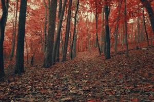 Autumn Blaze by kevron2001