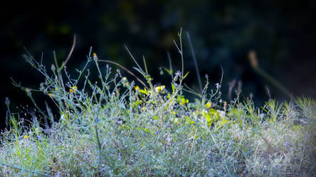 Grass composition 4.0 by lubbo