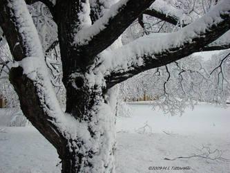 winterized by ogiedomane