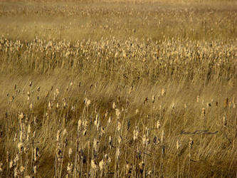 fields of tails by ogiedomane