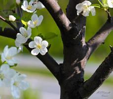 tree beauty by ogiedomane